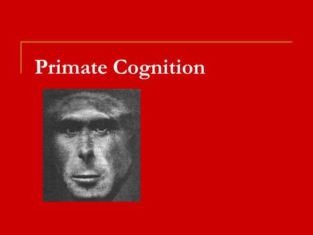 Primate Cognition. Social Learning Mechanisms  Mechanisms  Stimulus or Social Enhancement (instrumental)  Drawn to object/conspecific, learn via trial.