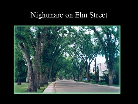 Nightmare on Elm Street. The Elms (genus Ulmus) - >30 species in genus -Europe has 5; N. America 8; Asia has 23 or more. - 2 ssp live in tropics - 6 spps.