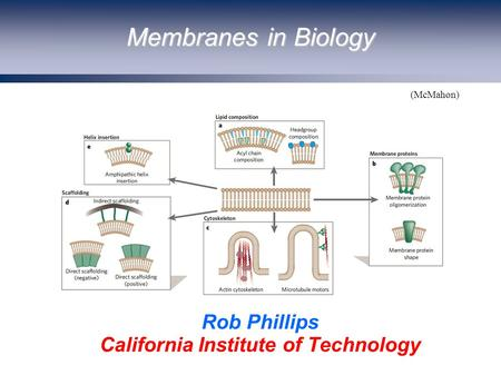 Membranes in Biology Rob Phillips California Institute of Technology (McMahon)