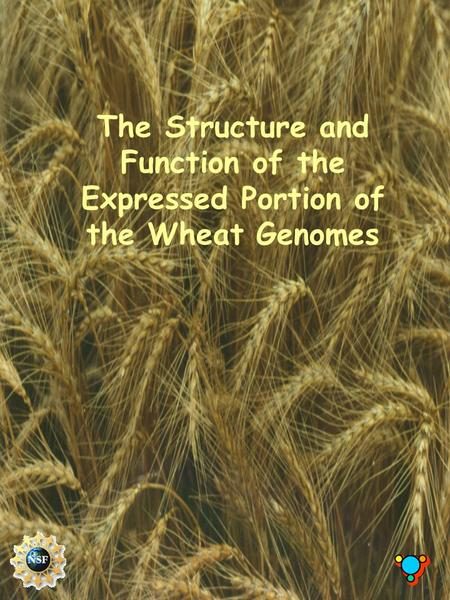 The Structure and Function of the Expressed Portion of the Wheat Genomes.