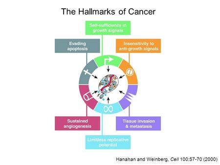 The Hallmarks of Cancer Hanahan and Weinberg, Cell 100:57-70 (2000)