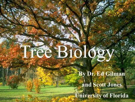 Tree Biology By Dr. Ed Gilman and Scott Jones University of Florida.