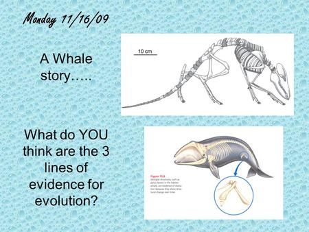 Monday 11/16/09 A Whale story….. What do YOU think are the 3 lines of evidence for evolution?