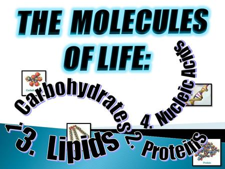 THE  MOLECULES OF LIFE: 4.  Nucleic Acids 1.  Carbohydrates 3.  Lipids