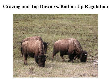 Grazing and Top Down vs. Bottom Up Regulation. Grazers Generally herbivores Remove tissue from a large number of 'prey' individuals Are rarely lethal.