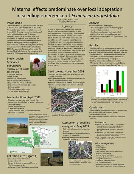 Maternal effects predominate over local adaptation in seedling emergence of Echinacea angustifolia Amy B. Dykstra, Ruth G. Shaw University of Minnesota.