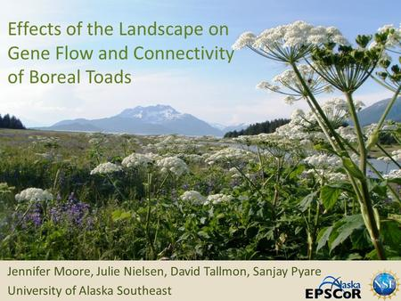 Effects of the Landscape on Gene Flow and Connectivity of Boreal Toads Jennifer Moore, Julie Nielsen, David Tallmon, Sanjay Pyare University of Alaska.