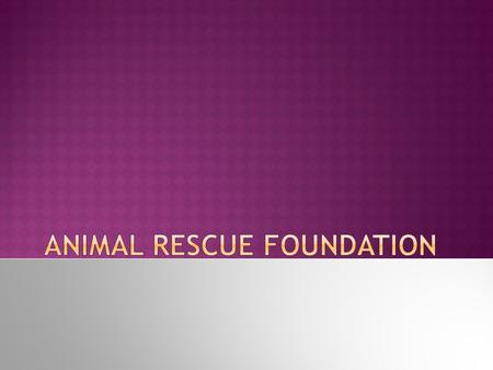 2 Animal Angels  What do we do?  Foundation history  How can you help?  Where are we located?