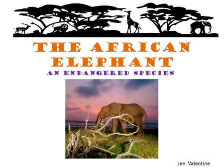 The African Elephant An endangered species Jen Valentine.