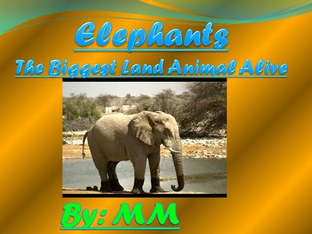 Elephants The Biggest Land Animal Alive