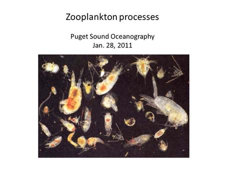 Zooplankton processes Puget Sound Oceanography Jan. 28, 2011.