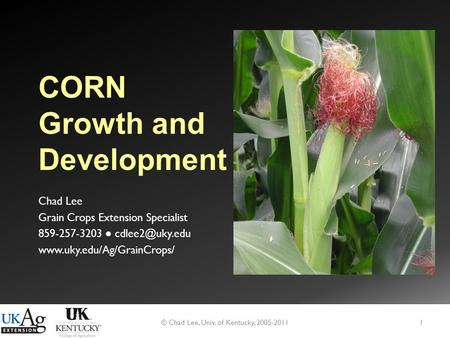 CORN Growth and Development Chad Lee Grain Crops Extension Specialist 859-257-3203 ●  © Chad Lee, Univ. of Kentucky,