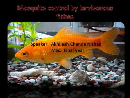 Speaker: Akhilesh Chanda Nishad MSc. Final year. INTRODUCTION  Different methods of mosquito larvae control are used throughout history, and they include.