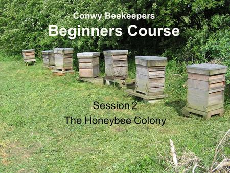 Conwy Beekeepers Beginners Course Session 2 The Honeybee Colony.