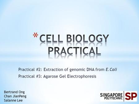 Practical #2: Extraction of genomic DNA from E.Coli Practical #3: Agarose Gel Electrophoresis Bertrand Ong Chan JianPeng Salanne Lee.
