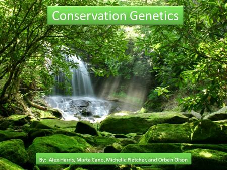 Conservation Genetics By: Alex Harris, Marta Cano, Michelle Fletcher, and Orben Olson.