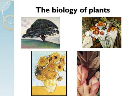 The biology of plants I. The Plant Cell PS: CO 2 + organelles H2OH2OC 6 H 12 O 6 +O2O2 Light Energy RS:C 6 H 12 O 6 +O2O2 CO 2 +H2OH2O ATP Chloroplast.