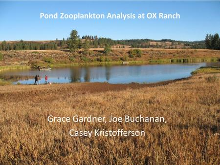 Grace Gardner, Joe Buchanan, Casey Kristofferson Pond Zooplankton Analysis at OX Ranch.