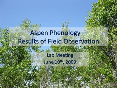 Aspen Phenology— Results of Field Observation Lab Meeting June 10 th, 2009.