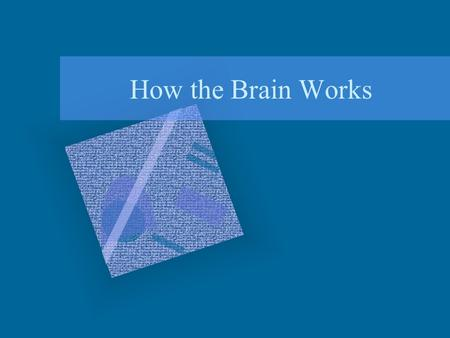 How the Brain Works Overview Ways of Studying the Brain How is the Brain Organized?