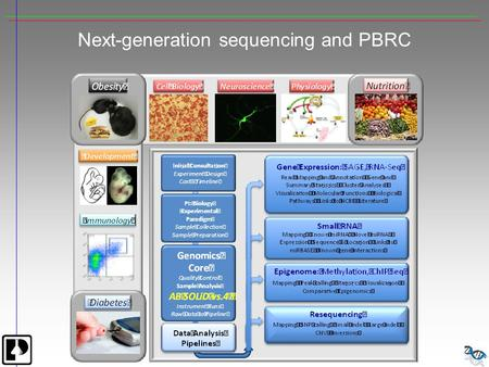 Next-generation sequencing and PBRC. Next Generation Sequencer Applications DeNovo Sequencing Resequencing, Comparative Genomics Global SNP Analysis Gene.