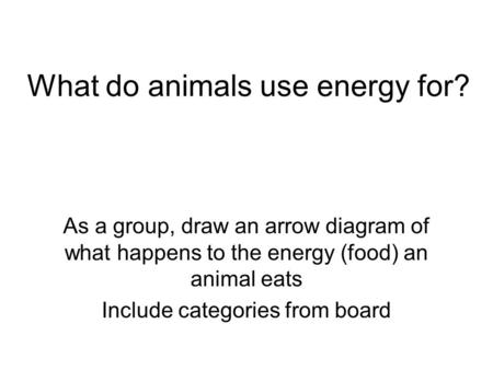What do animals use energy for? As a group, draw an arrow diagram of what happens to the energy (food) an animal eats Include categories from board.
