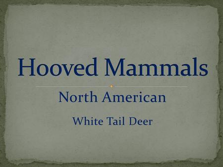 North American White Tail Deer. Give birth to live young Mammary glands Warm-blooded Cloven Hoof Ruminant Single Hoof.