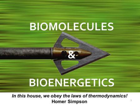 1 BIOMOLECULES & BIOENERGETICS In this house, we obey the laws of thermodynamics! Homer Simpson.