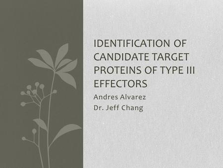 Andres Alvarez Dr. Jeff Chang IDENTIFICATION OF CANDIDATE TARGET PROTEINS OF TYPE III EFFECTORS.