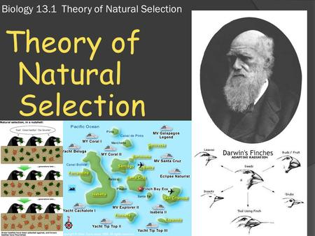 Biology 13.1 Theory of Natural Selection