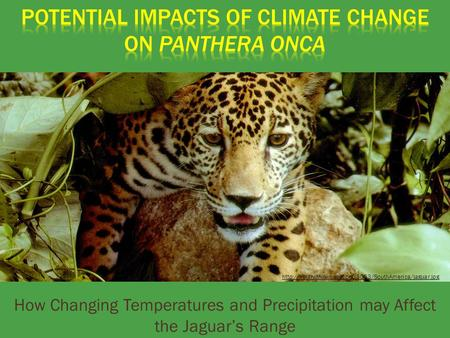 How Changing Temperatures and Precipitation may Affect the Jaguar's Range