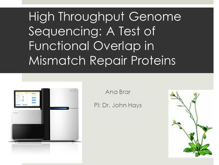 High Throughput Genome Sequencing: A Test of Functional Overlap in Mismatch Repair Proteins Ana Brar PI: Dr. John Hays.