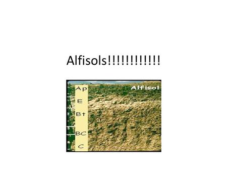 Alfisols!!!!!!!!!!!!. Develop in semiarid to moist areas Primarily forested soils They have clay and nutrient rich sub-soils that hold and supply.