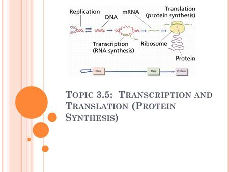 T OPIC 3.5: T RANSCRIPTION AND T RANSLATION (P ROTEIN S YNTHESIS )
