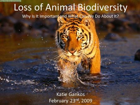 Loss of Animal Biodiversity Why Is It Important and What Can We Do About It? Katie Gankos February 23 rd, 2009.
