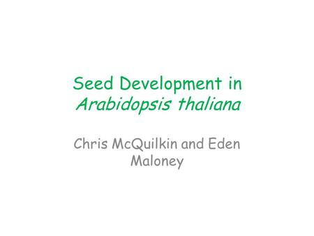 Seed Development in Arabidopsis thaliana Chris McQuilkin and Eden Maloney.
