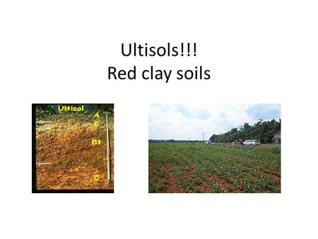 Ultisols!!! Red clay soils. Very Similar to Alfisols However, they are highly weathered Low nutrient value Have undergone a great deal of leaching.