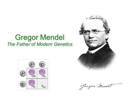 Gregor Mendel The Father of Modern Genetics. Gregor Mendel (1822-1884) was born in a small village in Heinzendorf (now Czechoslovakia).