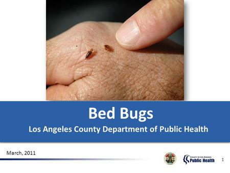 1 Bed Bugs Los Angeles County Department of Public Health Bed Bugs Los Angeles County Department of Public Health March, 2011.