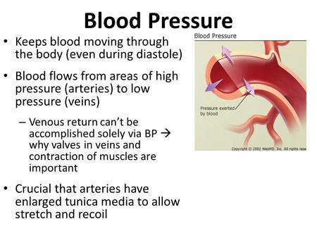 Blood Pressure Keeps blood moving through the body (even during diastole) Blood flows from areas of high pressure (arteries) to low pressure (veins) –