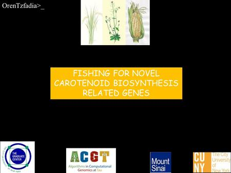 FISHING FOR NOVEL CAROTENOID BIOSYNTHESIS RELATED GENES OrenTzfadia>_.