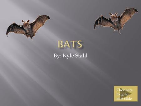 By: Kyle Stahl Click here to go to next slide  Bats live everywhere except for a few places  Some of those places are where its extremely hot or extremely.