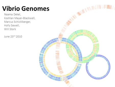 Vibrio Genomes Naama Dekel, Koshlan Mayer-Blackwell, Marcus Schicklberger, Holly Sewell, Will Stork June 23 rd 2010.