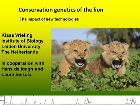 Conservation genetics of the lion Klaas Vrieling Institute of Biology Leiden University The Netherlands In cooperation with Hans de Iongh and Laura Bertola.