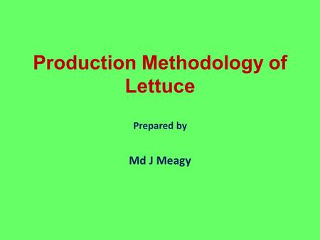 Production Methodology of Lettuce Prepared by Md J Meagy.