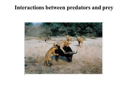 Interactions between predators and prey. What is a predator? Masked Shrew Sorex cinereus Mountain lion Puma concolor Brook Trout Salvelinus fontinalis.