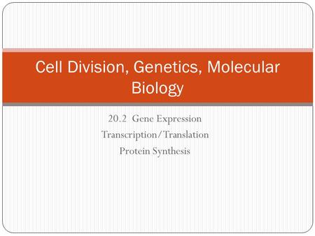 20.2 Gene Expression Transcription/Translation Protein Synthesis Cell Division, Genetics, Molecular Biology.