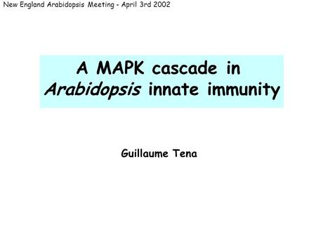 A MAPK cascade in Arabidopsis innate immunity New England Arabidopsis Meeting - April 3rd 2002 Guillaume Tena.