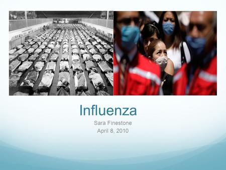 Influenza Sara Finestone April 8, 2010. The influenza virus causes 3-5 million cases of severe illness and up to 500,000 deaths annually.