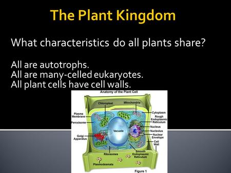 What characteristics do all plants share? All are autotrophs. All are many-celled eukaryotes. All plant cells have cell walls.